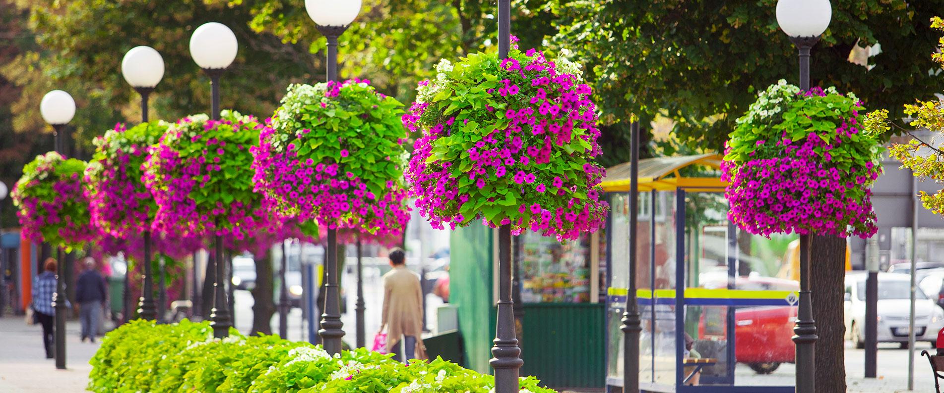 различных растения на улицах города фото соотечественники привыкли